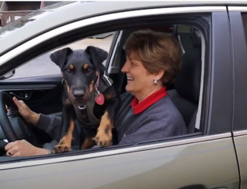 How to Drive Safely with Pets in the Car