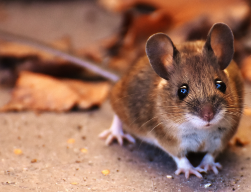 Tips to Keeping Rodents Out of Your Car